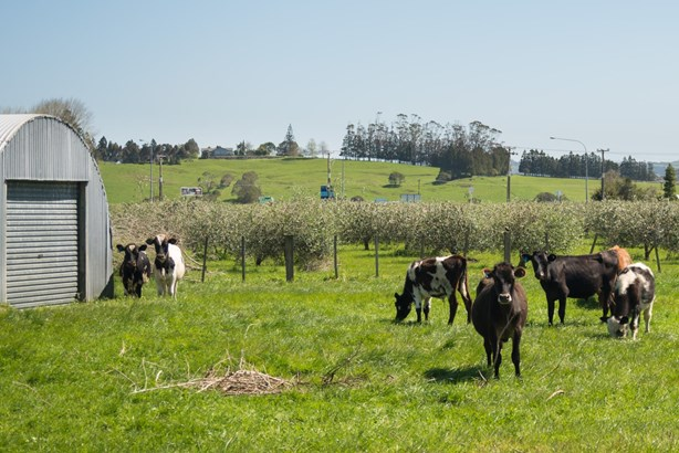 8 Meadows Lane, Pakaraka, Northland - NZL (photo 5)