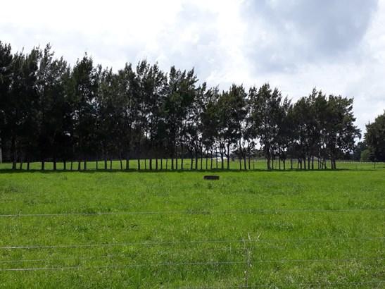 Onekura Road, Waipapa, Northland - NZL (photo 5)
