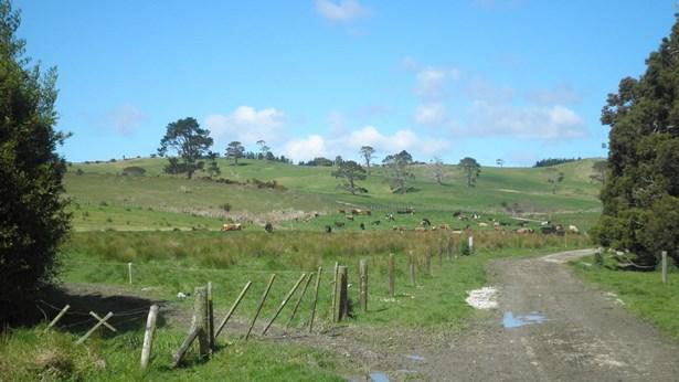 515 Kahikatea Flat Road, Waitoki, Auckland - NZL (photo 4)