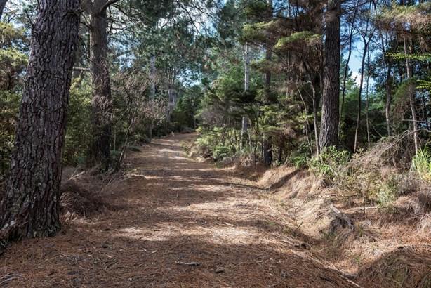 Cobblers Lane, Riverhead, Auckland - NZL (photo 5)