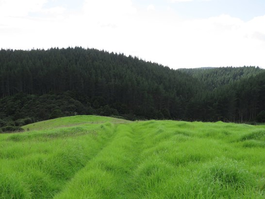 Clements Road, Matapouri, Northland - NZL (photo 5)