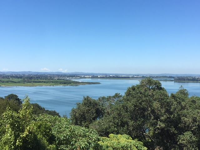 372a Hillsborough Road, Hillsborough, Auckland - NZL (photo 4)