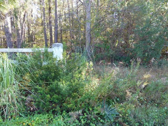 Acreage/Farm Plantation - Hardeeville, SC (photo 4)