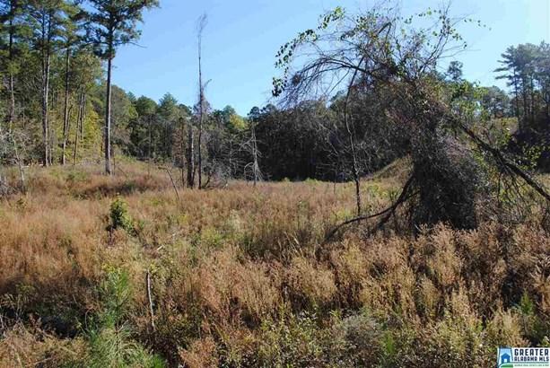 36 Acres Barton Rd 36 Acres, Marion, AL - USA (photo 5)