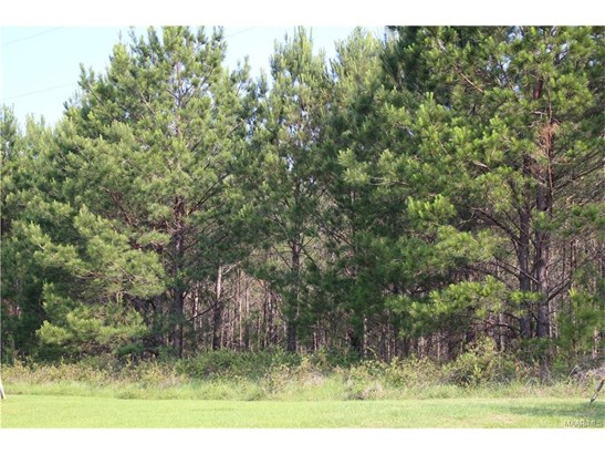 Lot 21 Chesson Hill Drive, Fitzpatrick, AL - USA (photo 1)