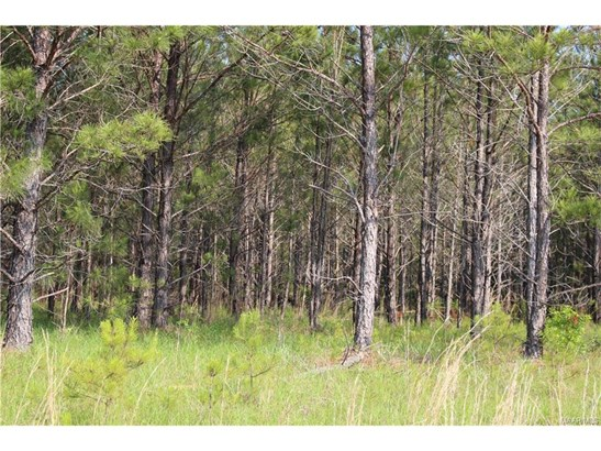 Lot 21 Chesson Hill Drive, Fitzpatrick, AL - USA (photo 2)