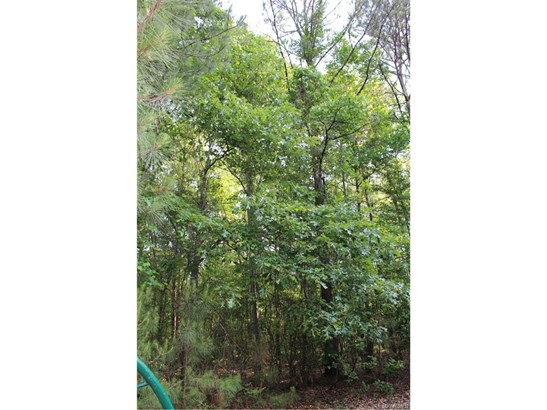 Lot 21 Chesson Hill Drive, Fitzpatrick, AL - USA (photo 3)