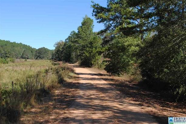 66 Acres Barton Rd 66 Acres, Marion, AL - USA (photo 4)