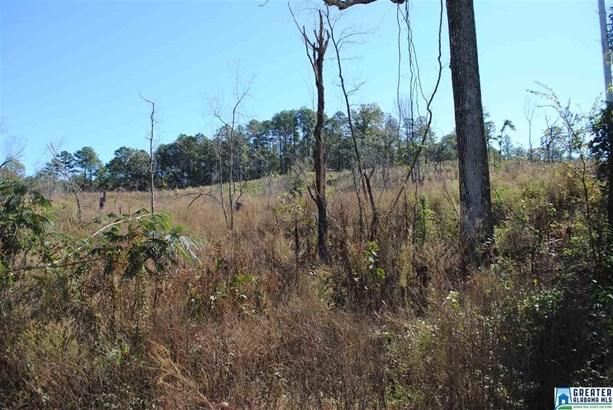 66 Acres Barton Rd 66 Acres, Marion, AL - USA (photo 5)