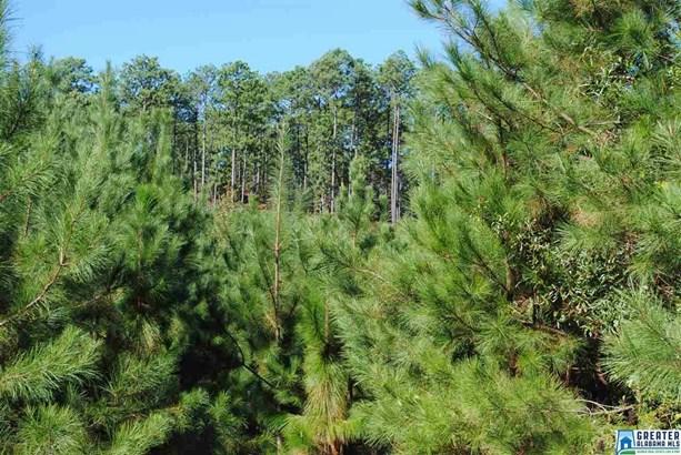 119 Acres Barton Rd 119 Acres, Marion, AL - USA (photo 2)