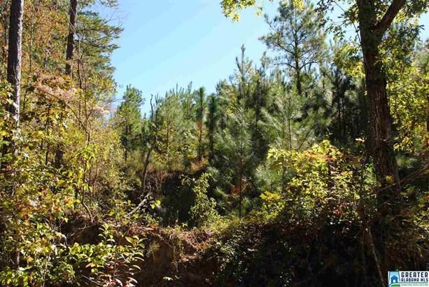 119 Acres Barton Rd 119 Acres, Marion, AL - USA (photo 3)