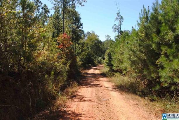 119 Acres Barton Rd 119 Acres, Marion, AL - USA (photo 4)