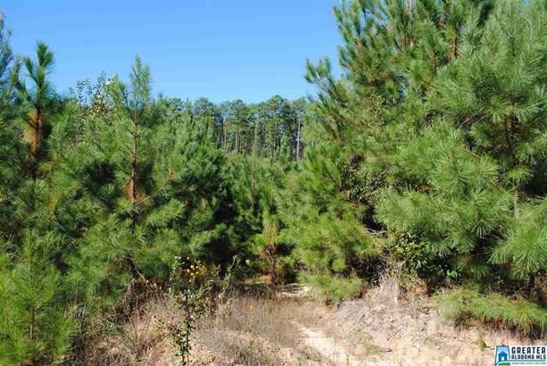 119 Acres Barton Rd 119 Acres, Marion, AL - USA (photo 5)
