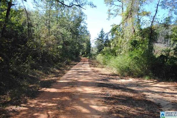 36 Acres Barton Rd 36 Acres, Marion, AL - USA (photo 2)