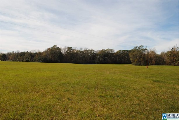 177.20 Acres Co Rd 37 177.20 Acr, Valley Grande, AL - USA (photo 4)