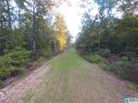 0 Will Black Hollow Rd #30 Acres, Pell City, AL - USA (photo 4)
