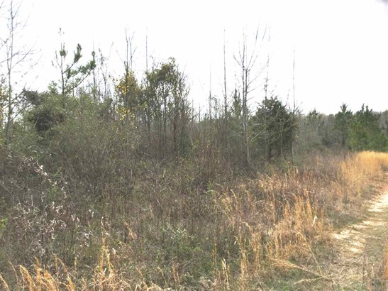 Residential Lot - Catawba, SC (photo 3)