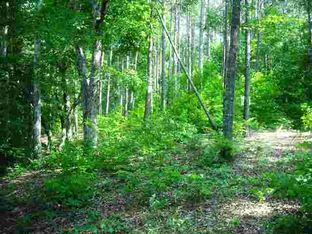Residential Lot - Great Falls, SC (photo 4)