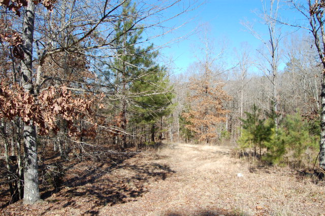 Residential Acreage - Hodges, SC (photo 1)