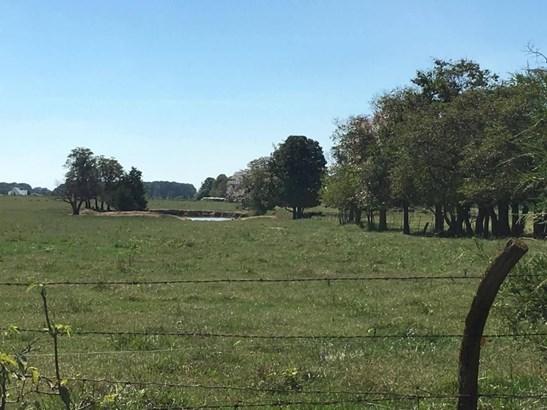 1800 Gypsy Flats, Fordland, MO - USA (photo 3)