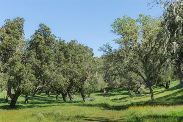 Oak Trail Ranch Road, Santa Ynez, CA - USA (photo 4)