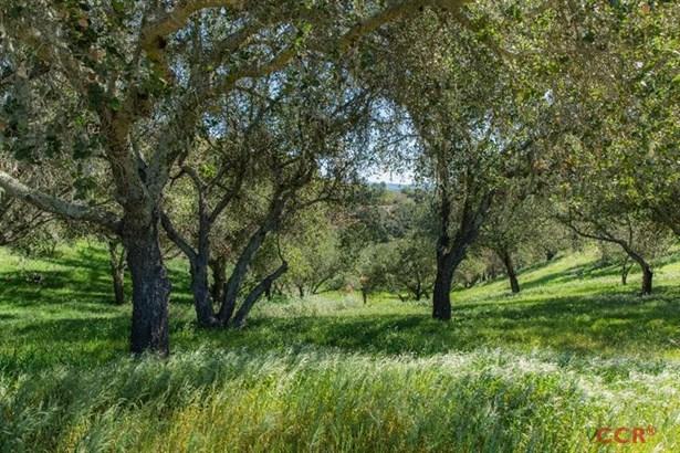 Oak Trail, Santa Ynez, CA - USA (photo 1)