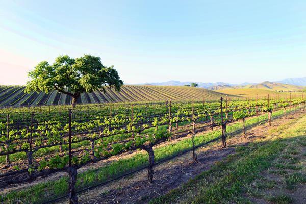 1575 Alisos, Santa Ynez, CA - USA (photo 2)