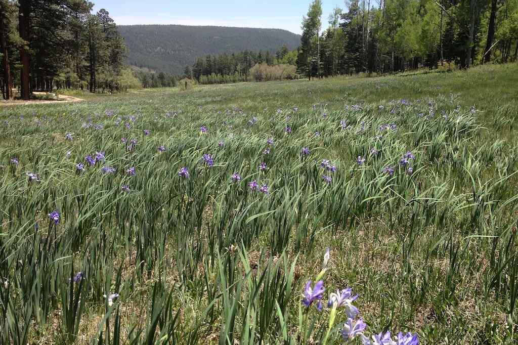 Ranch, Pleasure - Mora, NM (photo 3)