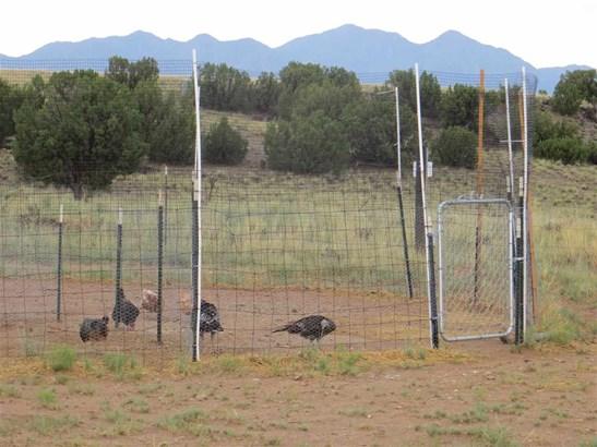 Farm - Cerrillos, NM (photo 4)