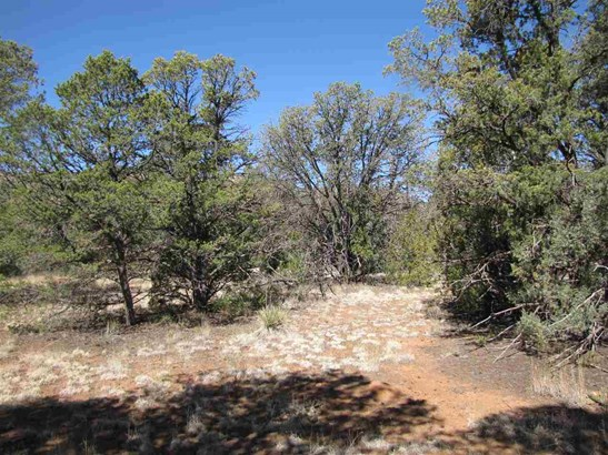 Residential Lot - Rowe, NM (photo 4)