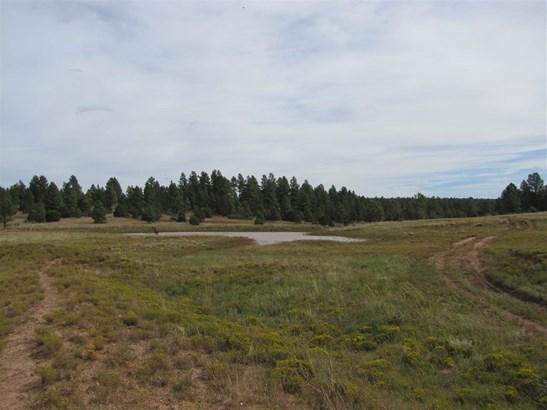 Ranch, Pleasure - San Geronimo, NM (photo 4)