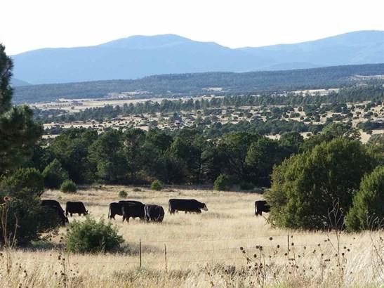 North New Mexico, Single Family - Las Vegas, NM (photo 5)
