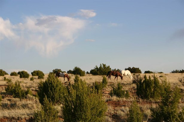 Residential Lot - Galisteo, NM (photo 3)