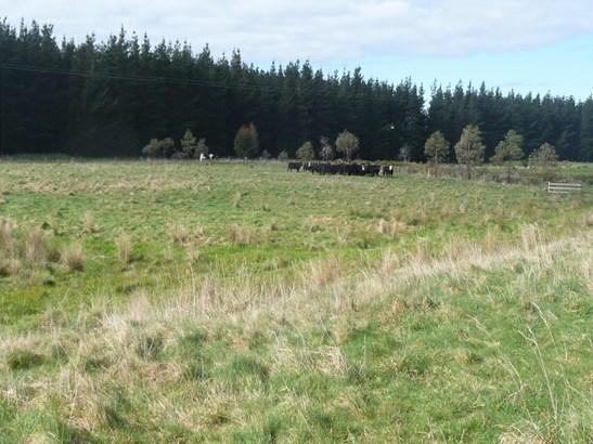 - Waiohine Valley Road, Woodside, South Wairarapa - NZL (photo 3)