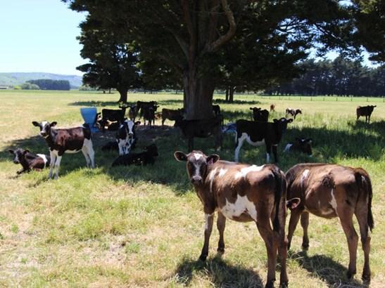 168 Range Road, Woodville, Tararua - NZL (photo 4)