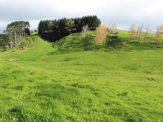- Umutaoroa Road, Dannevirke, Tararua - NZL (photo 5)