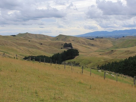 180 Waitahora Road, Dannevirke, Tararua - NZL (photo 5)
