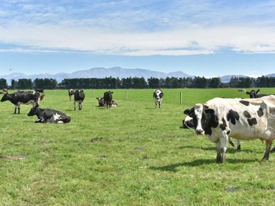 803 Ardlui Road, Hororata, Selwyn - NZL (photo 3)