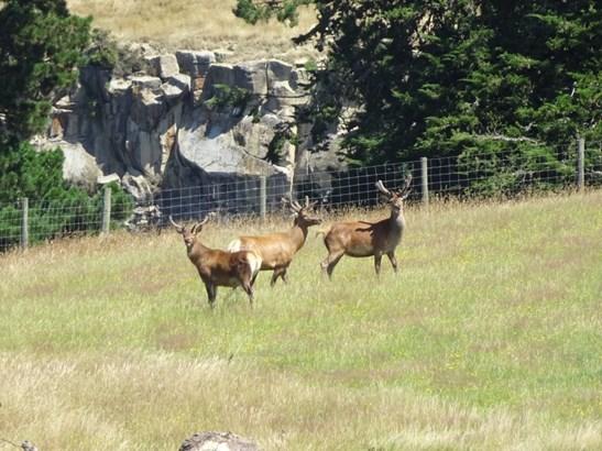 455 Spur Road, Rosewill, Timaru - NZL (photo 2)