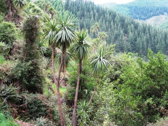 Kakahu, Timaru - NZL (photo 5)