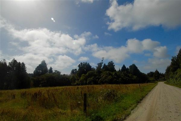 - Kongahu Swamp Road, Little Wanganui, Buller - NZL (photo 4)