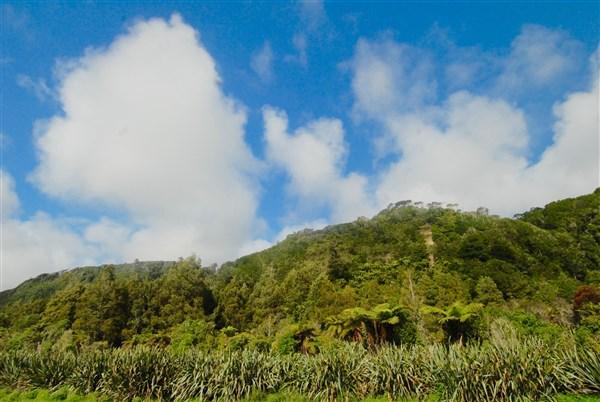 - Kongahu Swamp Road, Little Wanganui, Buller - NZL (photo 5)