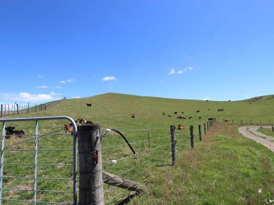 - Tuturewa Road  , Dannevirke, Tararua - NZL (photo 3)