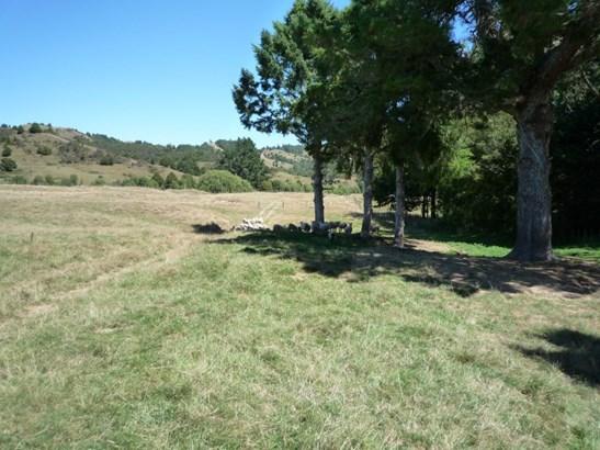 984 Taringamotu Road, Taumarunui, Ruapehu - NZL (photo 4)