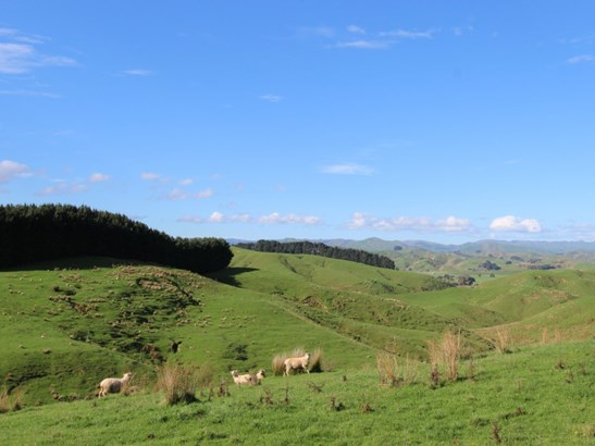498 Ridge Road North, Pahiatua, Tararua - NZL (photo 5)