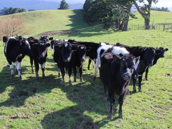 - Armstrong Road, Dannevirke, Tararua - NZL (photo 3)
