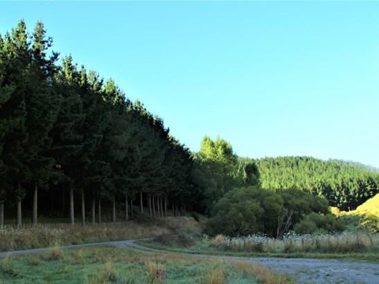 - Morea Road, Hawera, South Taranaki - NZL (photo 5)
