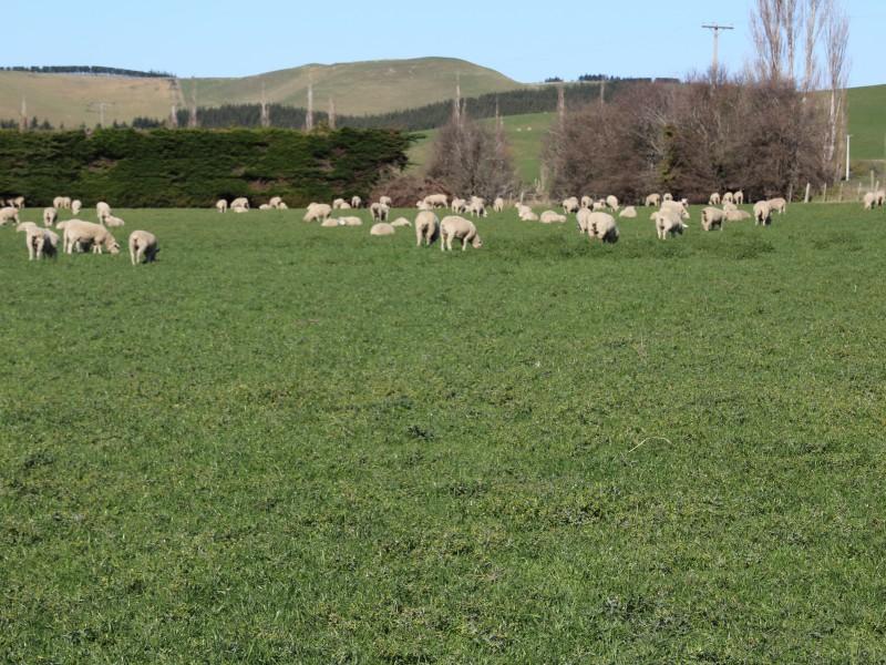 Palmerston, Otago - NZL (photo 2)