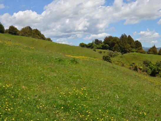 1630 Aotearoa Road, Otorohanga - NZL (photo 3)