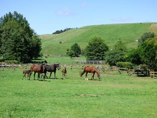 62 Newell Road, Tokoroa, South Waikato - NZL (photo 1)